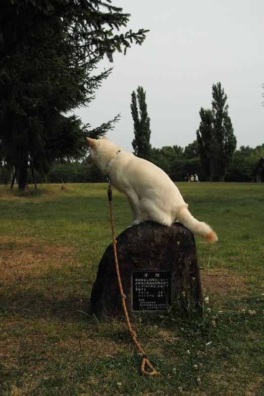 石碑に乗った白狐