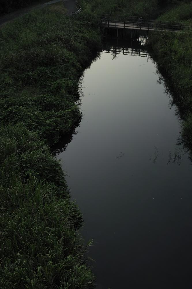 池、朝まだき