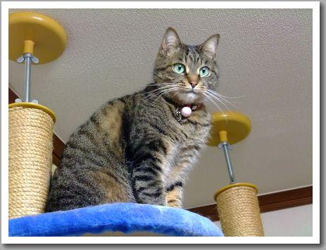 猫タワーとゆめ