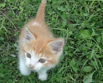 茅野の招き子猫