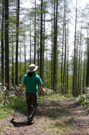 森でノルディックウォーキング