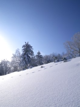 富良野雪景色