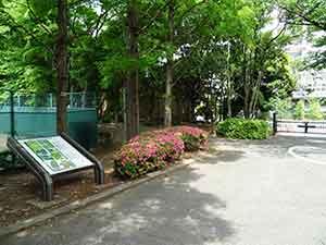 有明テニスの森公園ジョギングコース02