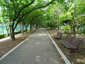 有明テニスの森公園ジョギングコース03