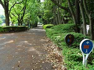 有明テニスの森公園ジョギングコース04