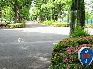 有明テニスの森公園ジョギングコース09
