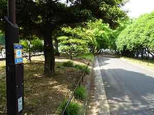 日比谷公園ランニングコース08