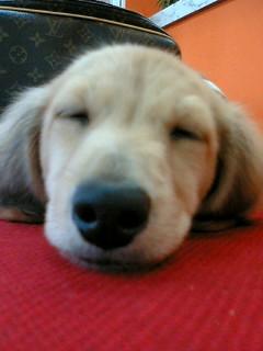 寝てるのもかわいい。