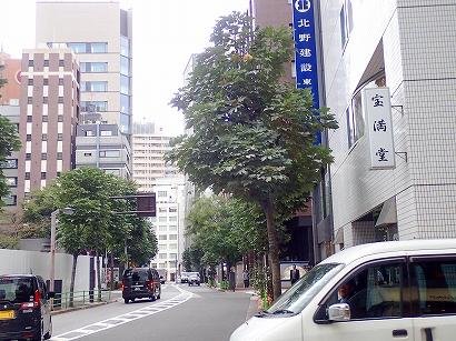 1アオギリ-PA230091.jpg
