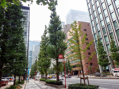 京2-3イチョウ-PA230060.jpg