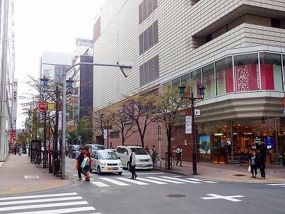 1-8シナノキ-PA230029.jpg