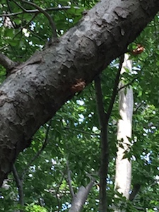 木にくっついている抜け殻.jpg