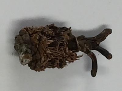 森の海老フライ 横.jpg