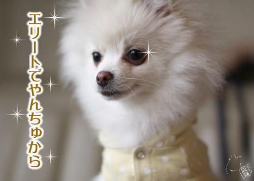 0401_8.jpg