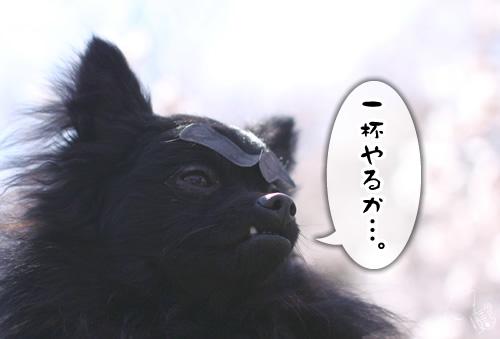 0409_6.jpg