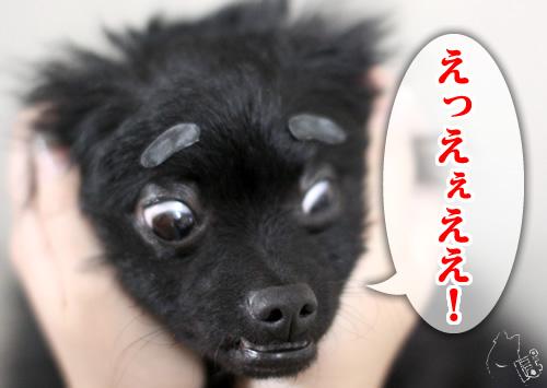0411_10.jpg