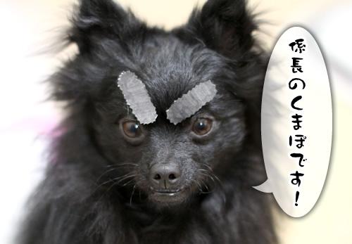 kurosho_1.jpg