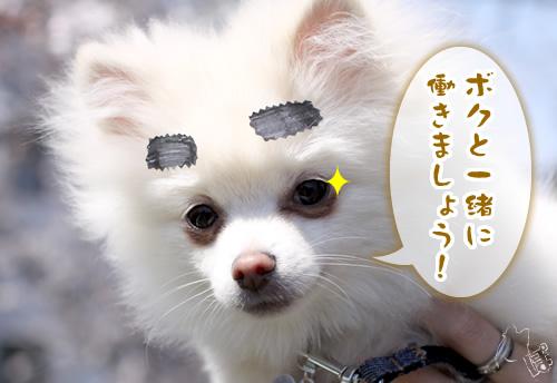 kurosho_2.jpg