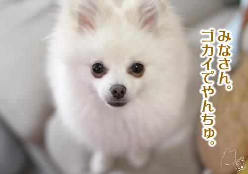 0518_3.jpg