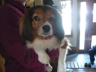 避難犬チェリー