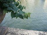 Doujima-River Osaka