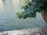 Dojima river Osaka