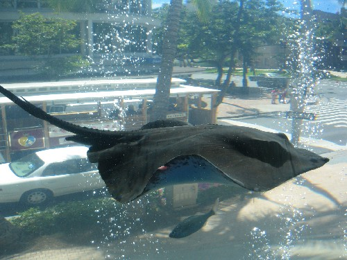 manta is flying in the city