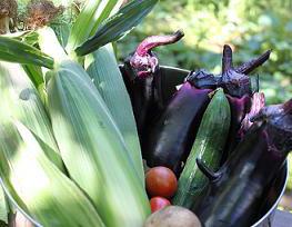 夏野菜 家庭菜園 ナス