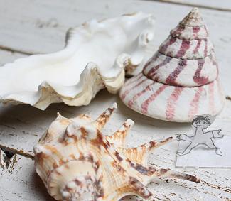 沖縄 貝殻
