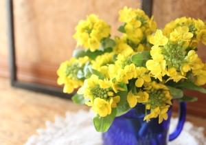 家庭菜園 白菜の花 ガーデニング