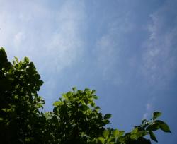 ハナミズキ 空 ガーデニング