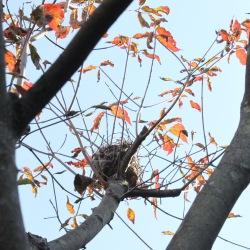 鳥の巣 巣