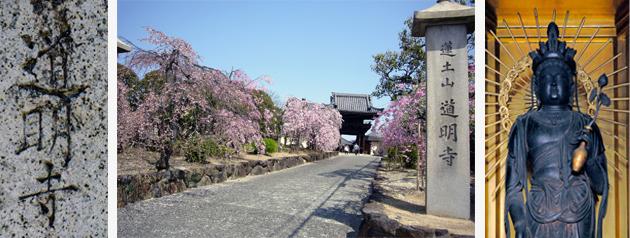 道明寺 山門枝垂れ桜 道明寺提供 十一面観音菩薩立像