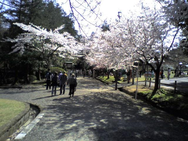 弥彦公園(2006.4.22)