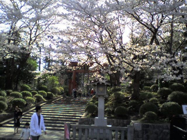 弥彦神社(2006.4.22)