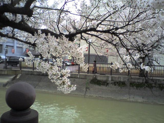 福島江の桜(2006.4.22)