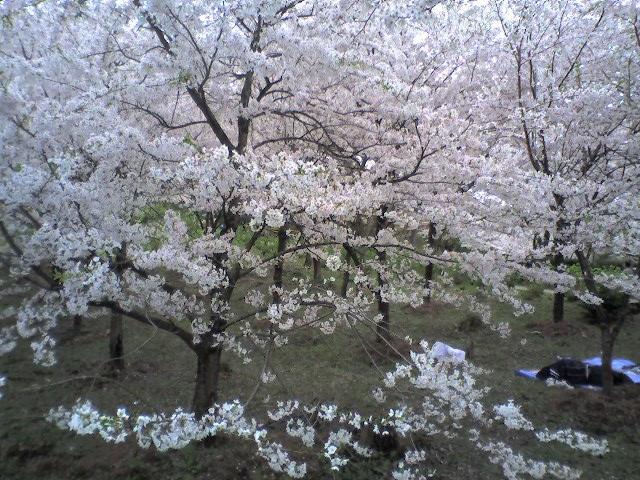 村松公園(2006.4.23 - 04 雲海)
