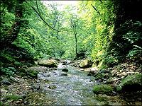 世界自然遺産:白神山地