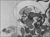 通訳案内士試験: 日本の絵画・壁画(2)