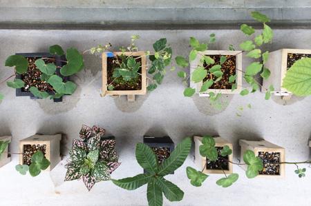 comadoの植物