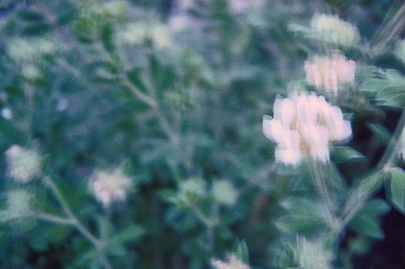 hommage07-mitsuki.jpg