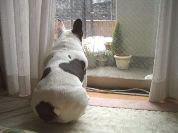 窓際で初雪鑑賞