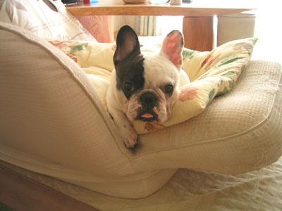 sofaでまったり