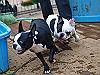 DOG RUN-08
