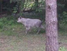 庭に鹿が現れました
