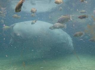 天王寺動物園 カバ