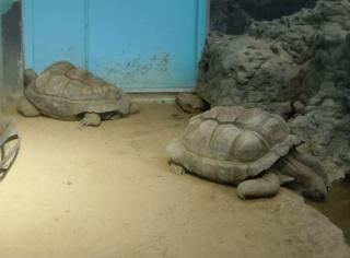 天王寺動物園 アイファー