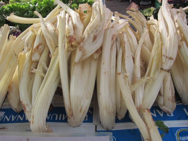 柔らかくなるように土をかぶせて栽培したカルド。バーニャカウダやグラタンにして食べる。