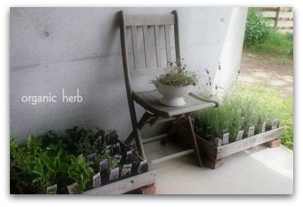 organic herb