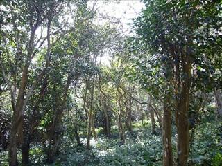 原生林の中